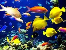 La mayor parte de las especies que viven en el mundo están aún por descubrir