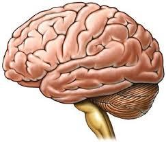 El Alzheimer se puede combatir con componentes del vino tinto y del té verde