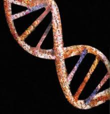 Científicos estadounidenses localizan un gen que regula el supresor de tumores PTEN