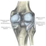 La artrosis de rodilla puede ser tratada con células madre de la médula ósea