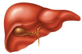 Científicos Japoneses crean el primer hígado humano a partir de células madre pluripotentes IPS