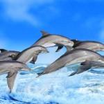 Los delfines recuerdan a sus amigos toda la vida