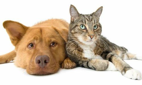 Un perro y un gato se convierten en hermanos de sangre