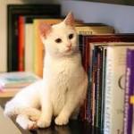 Un gato bibliotecario