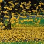 El país de los árboles de oro