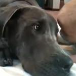 Un perro detecta los ataques epilépticos de su dueña