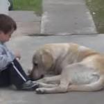 El perro y el niño con síndrome de Down