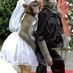 Matrimonios con animales