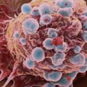 Una célula se apaga porque ya no sirve, ¿Es el envejecimiento necesario entonces?