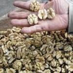 Comer nueces alarga la vida