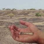 Un fósil de metacarpiano nos revela cuándo surgió la destreza humana