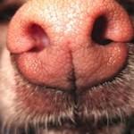 La nariz puede oler el peligro