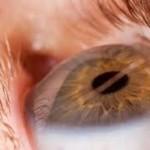Prevenir la esclerosis múltiple mediante la retina