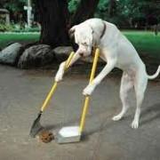Los perros se guían del campo magnético para defecar
