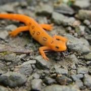 Medusas, salamandras e incluso gusanos salvan vidas